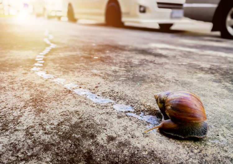 Close-up of snail on street