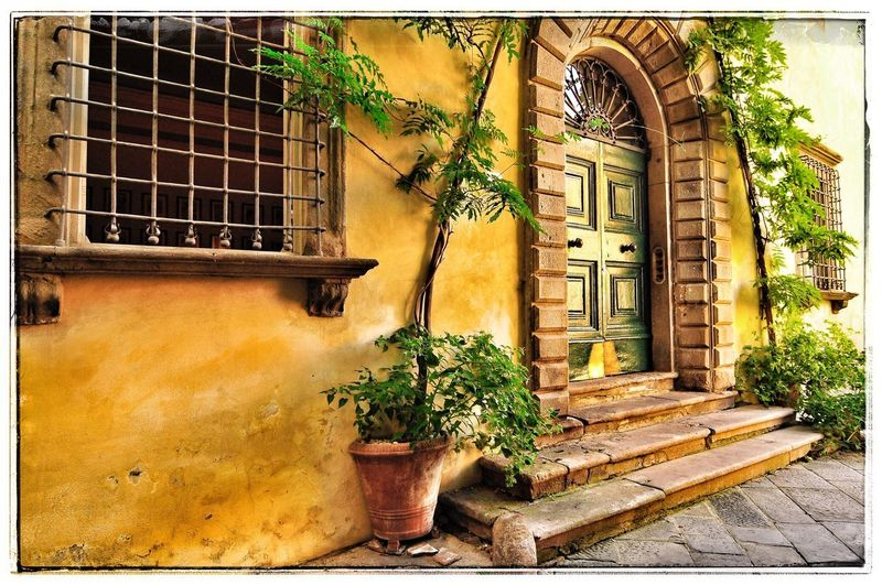 Lucca Italy Architecture Built Structure Plant Building Exterior Building Window Auto Post Production Filter Door Tree Sunlight