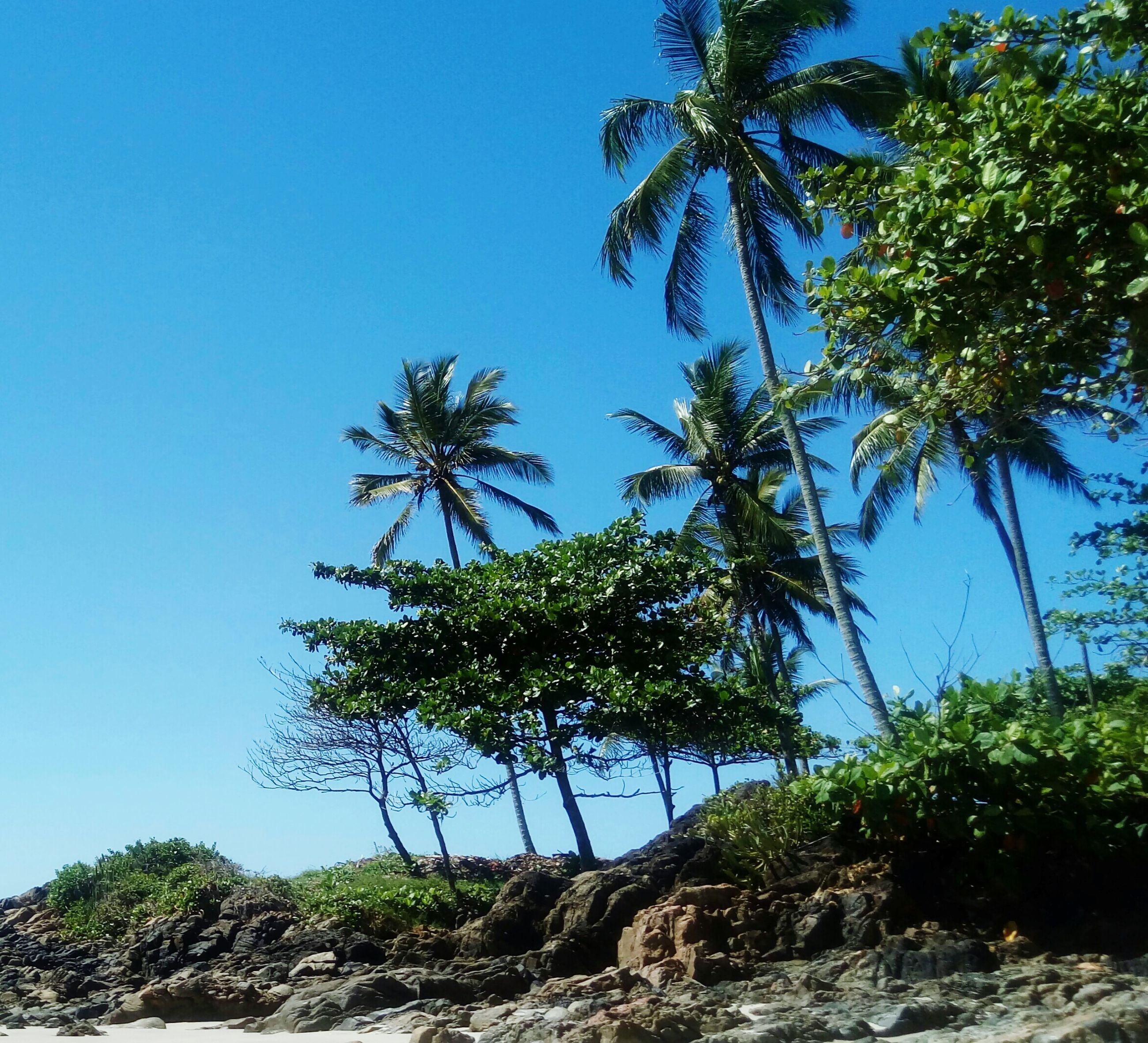 tree, clear sky, blue, tranquil scene, tranquility, palm tree, scenics, growth, low angle view, rock - object, tree trunk, solitude, beauty in nature, nature, non-urban scene, remote, outdoors, day, green color, mountain, branch, countryside, green, coconut palm tree, single tree, no people, tall - high, joshua tree, rock formation