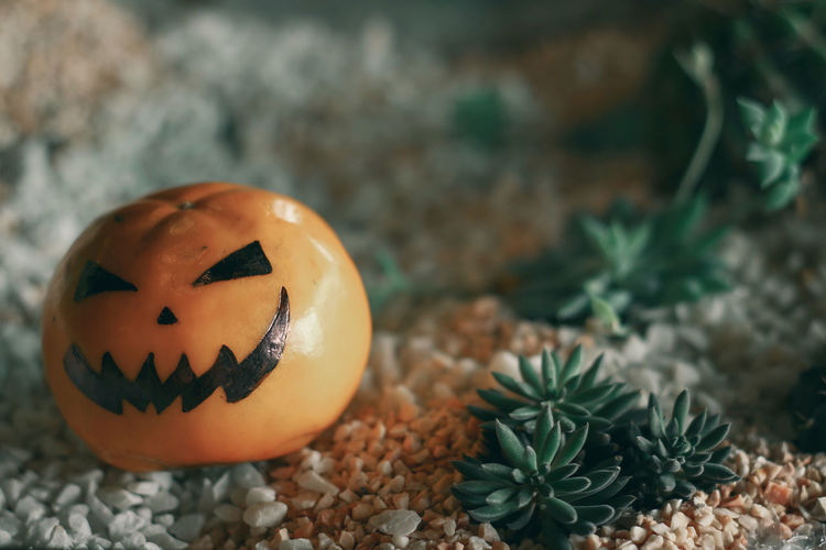 High angle view of pumpkin on stone during halloween