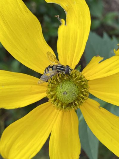 Close-up of insect on yellow flower