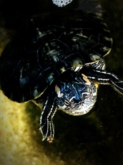 Pets Turtle Love