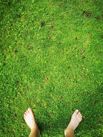 Low section of person standing on grass