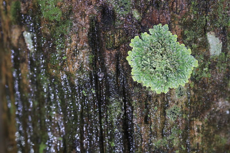 Close up green moss on tree Beautiful Freshness Green Textures Trees Beauty Beauty In Nature Close-up Day Detail Environment Fresh Green Moss On Tree Growth Lichen Moss Nature No People Outdoors Plant Texture Textured  Tree Tree Trunk Trunk