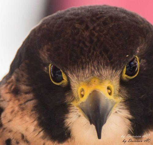 Miradas IV / Glances IV.... Eyeem Fauna EyeEm Best Shots EyeEm Birds Portrait