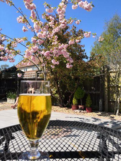 Tree Wineglass