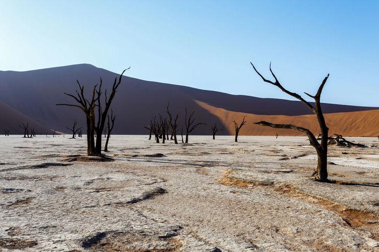 Bare trees on desert against sky