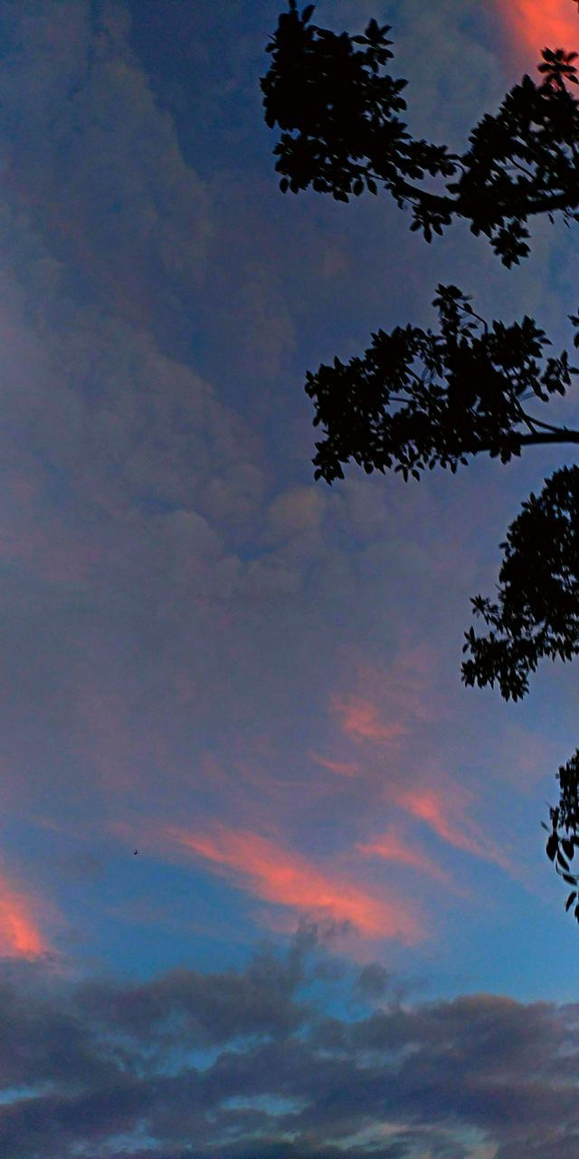 sky, cloud - sky, tree, beauty in nature, low angle view, tranquility, sunset, plant, nature, no people, silhouette, tranquil scene, scenics - nature, outdoors, dusk, idyllic, growth, multi colored, backgrounds, meteorology
