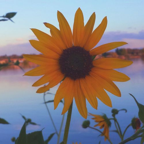 Sunflower Confluence Lake