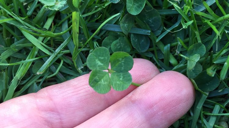 Lucky Luck Green Color Capture Freedom Nature Naturelover Nature Photography Green Color Quatrefoil Good Luck Quadrifoglio Human Hand Human Body Part Green Color Hand Leaf Plant Part One Person Plant Real People Human Finger Body Part Outdoors Day Nature