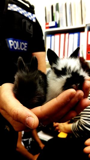 Cropped image of policeman holding cute bunnies