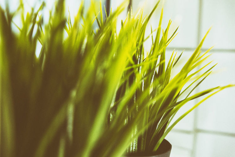 Plastic decoration Artificial Flower Close Up Close-up Day Decoration depth of field Dof Freshness Grass Green Color Growth Indoors  Nature No People Outdoors Plant Plastic Plastic Flower Plastic Grass Selective Focus