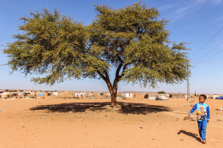 Even in the desert there are trees and children Blue Childhood Clear Sky Hamada Outdoors Rasd Real People Sahara Sahara Desert Saharawi Saharawi Camps Sahrawi Arab Democratic Republic Sand Sky Tree Western Sahara First Eyeem Photo