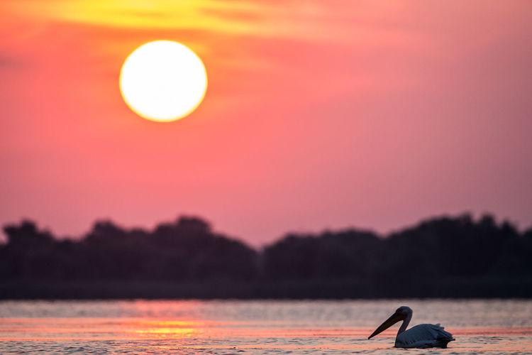 Danube Delta Donau Donaudelta Nature Naturfotografie Romania Wildlife Photography Animal Wildlife Animals Beauty In Nature Nature Rumänien Sunset Tranquility Water Wildlife
