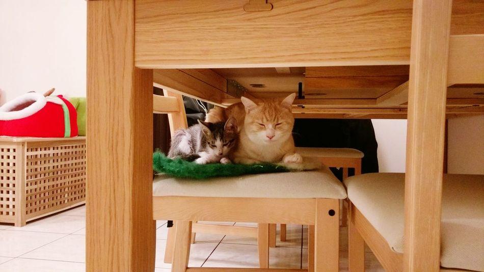Cat Domestic Animals Domestic Cat Neko Meow Gato 毛小孩 貓 貓咪睡覺 貓咪的日常 Animal Themes Kitten Cute 喵 喵星人 Catoftheday