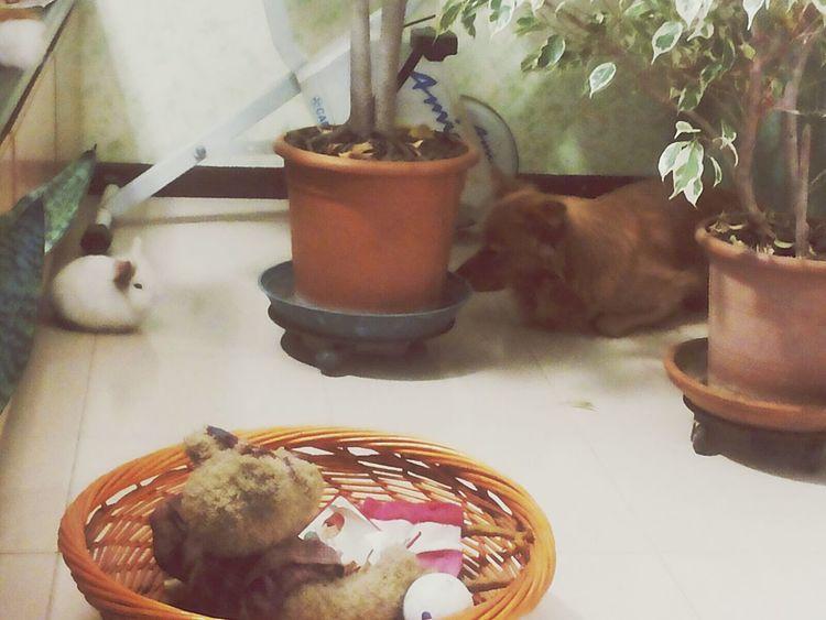 Animal Photography Dog Love Rabbit ❤️