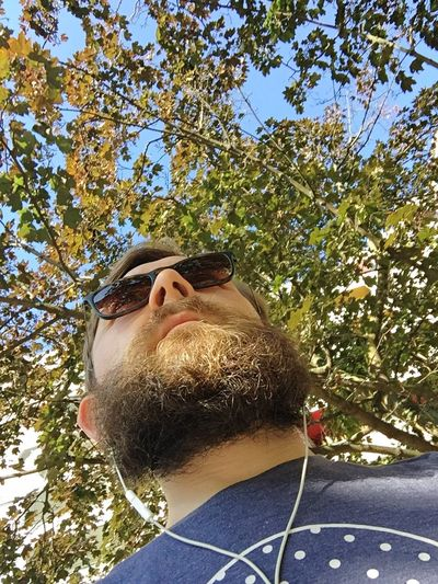 Low angle view of sunglasses on branch