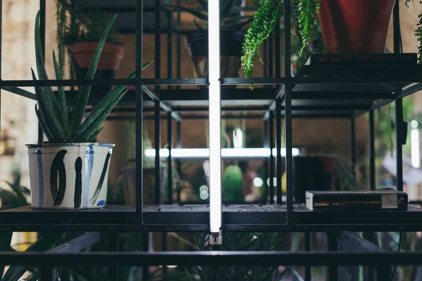 Indoors  Potted Plant Plant No People Day Flower Nature Close-up Freshness Crucifix Neon Neon Lights