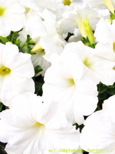 Flower Buzz
