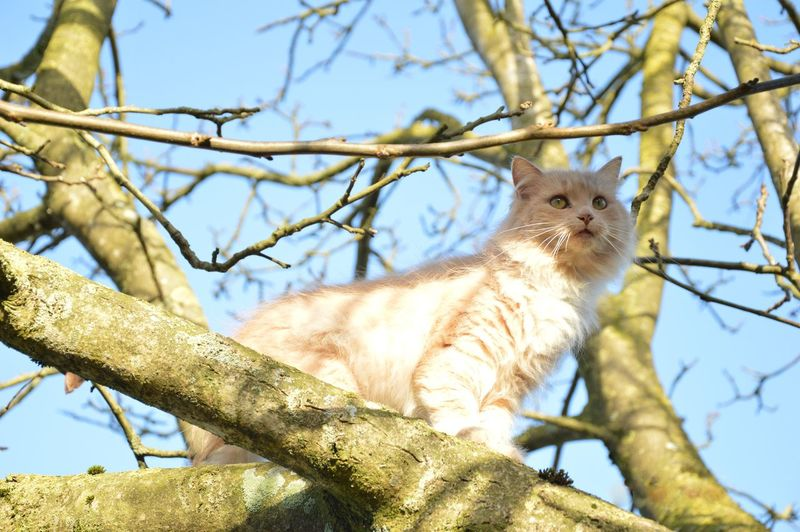 Alertness Animal Themes Branch Cat Curiosity Depth Of Field Feline One Animal Outdoors Selective Focus Zoology