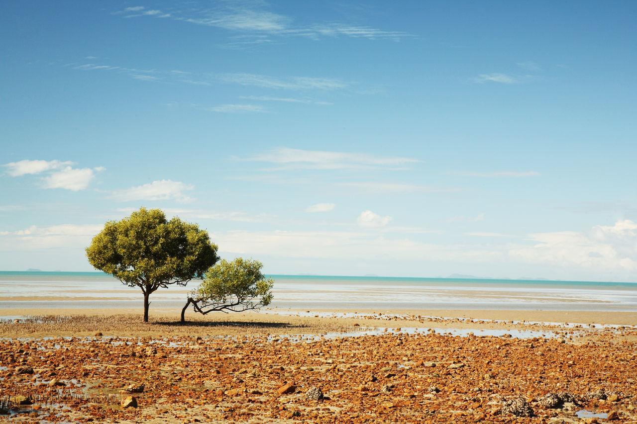 Tree On Beach Against Sky