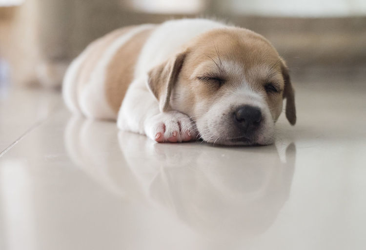 Sleeping puppies Animal Animal Themes Canine Dog Domestic Domestic Animals Indoors  Mammal No People One Animal Pets Petsofinstagram Puppies Puppy Relaxation Young Animal