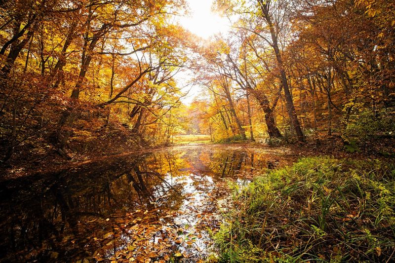 Autumn Leaf Nature Change Scenics Beauty In Nature Reflection Forest Tree Tranquil Scene Fog Landscape Sunlight Sunbeam Outdoors Idyllic Vibrant Color Tranquility Environment Morning Autumn Colors Fall Colors Pond Water Reflections