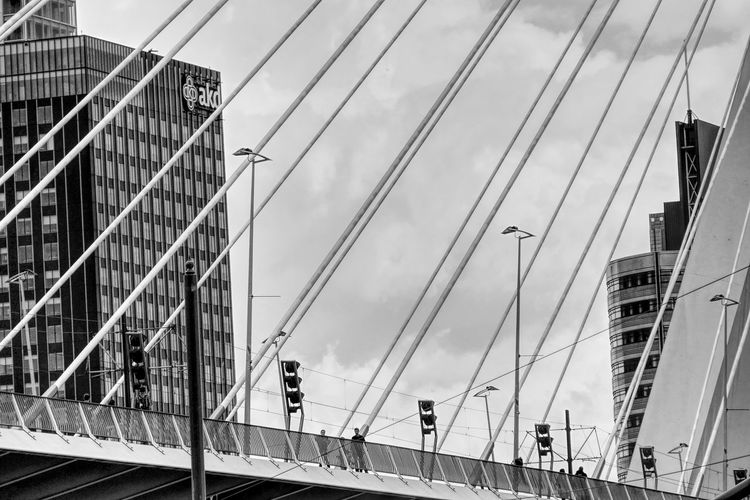 people crossing the Erasmus bridge in Rotterdam Affinity Photo Architecture Bridge Bridge - Man Made Structure Building Exterior Buildings Built Structure Cable City Cityscape Cloud - Sky Connection Crossing The Bridge Day Erasmus Bridge Erasmusbrug Outdoors People Rotterdam Rotterdam Architecture Sky Steel Cable Street Photography Streetphotography Adapted To The City