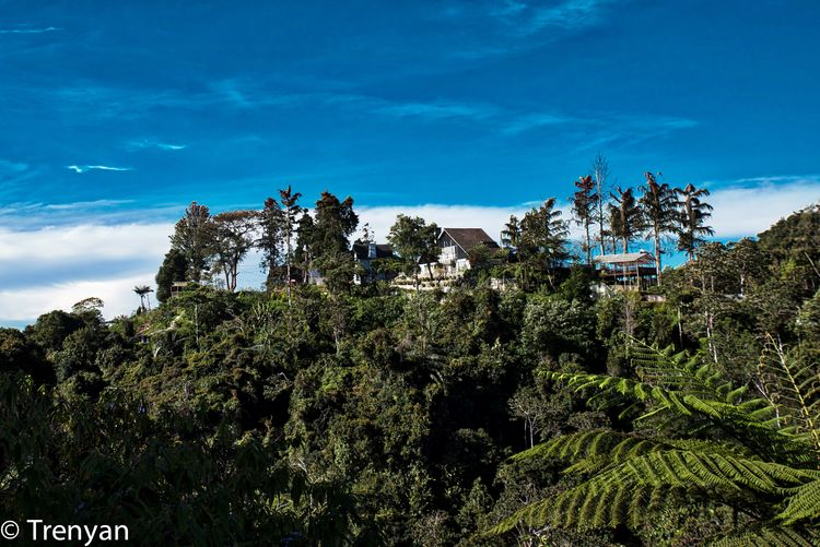 Jim Thomson's Cottage Beauty In Nature Cameron Highlands Jim Thomson Cottage Outdoors Scenics Tranquil Scene