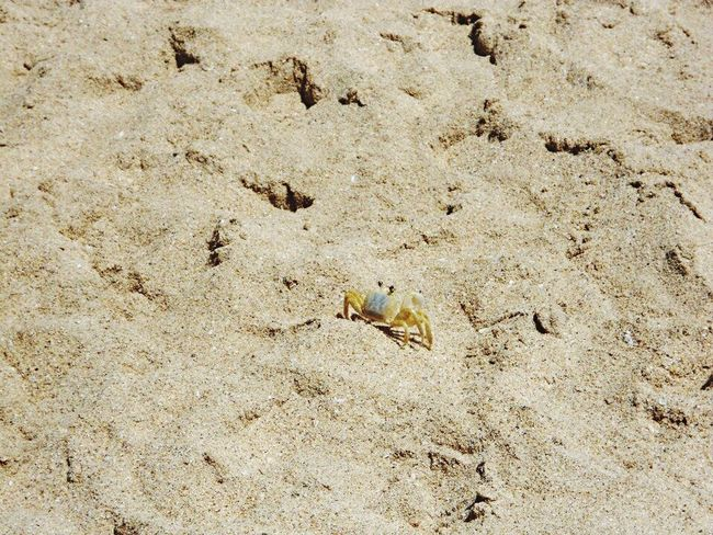 Sand Beach High Angle View Childhood Outdoors Multi Colored Nature Day Vacations Tranquility Beauty In Nature Non-urban Scene No People Remote