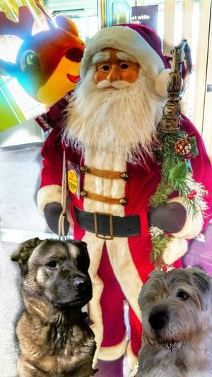 https://youtu.be/juPPmoNYl14 Christmas Dreams Santa Claus Was Here.... O__O Prancer Toyoutsiders The K9GB Those Dogs Are Cooler Than Their Owners Family Matters