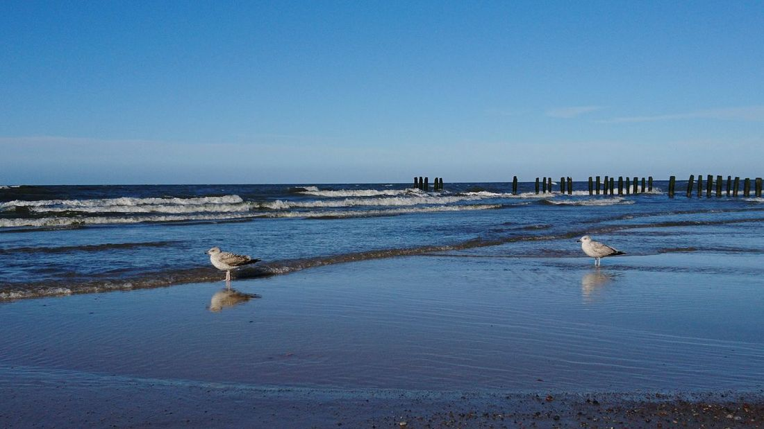 Sea Beach Water Nature Scenics Horizon Over Water Sky Beauty In Nature Outdoors Day Tranquility Animals In The Wild Animal Themes Sand No People Bird Birds Seagull Seagulls And Sea Reflections In The Water Reflection Winter Sunny Day