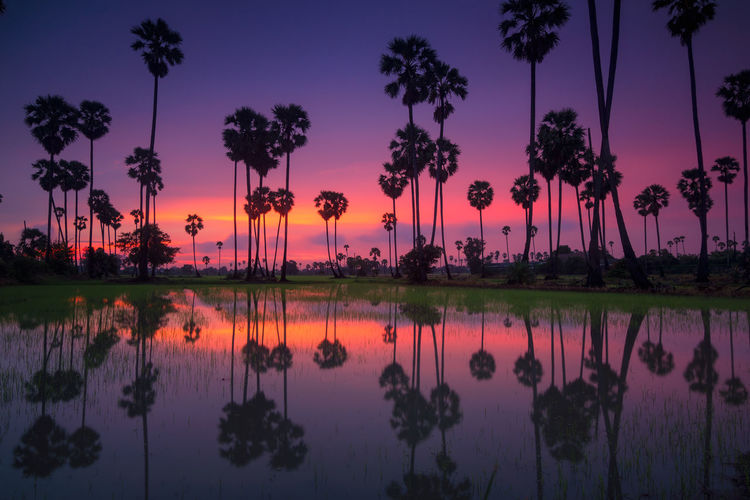 palm trees on beautiful sunset background Tree Plant Reflection Water Beauty In Nature Tranquility Sky Tropical Climate Scenics - Nature Tranquil Scene Lake Palm Tree Nature Sunset No People Idyllic Waterfront Growth Coconut Palm Tree Outdoors Reflection Lake Romantic Sky