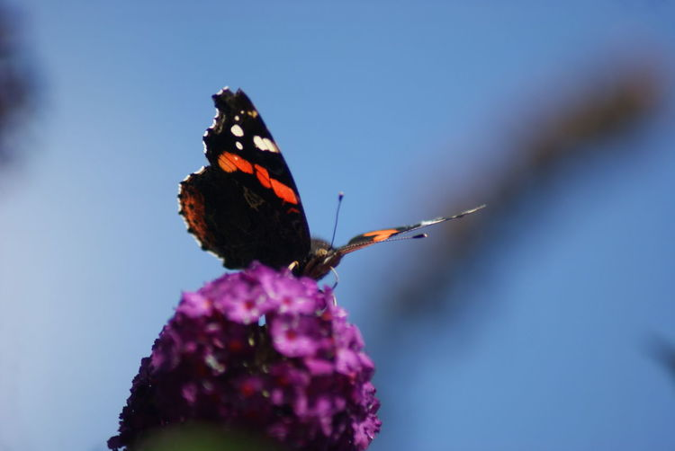 Butterfly Perching On Flower