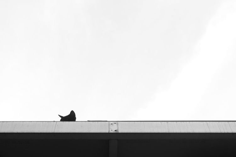 One Animal Animal Themes Perching Low Angle View Hello I See You Bird Watching On The Rooftop Four Legs And A Tail Kitty Cat Oh Hai Dere Blackandwhite