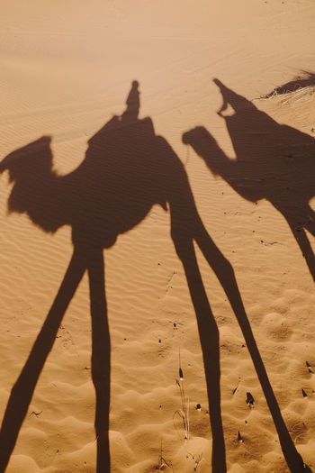 Shadow of people and camels on sand in desert