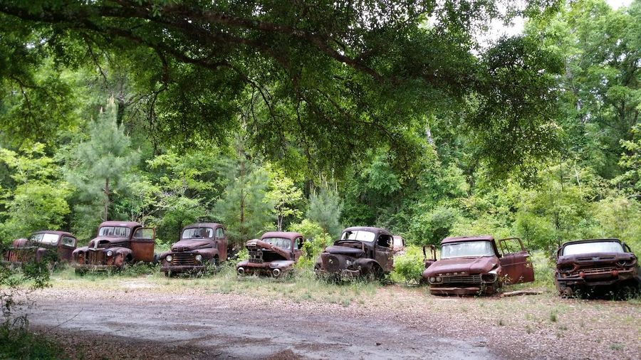 Cars on road amidst trees