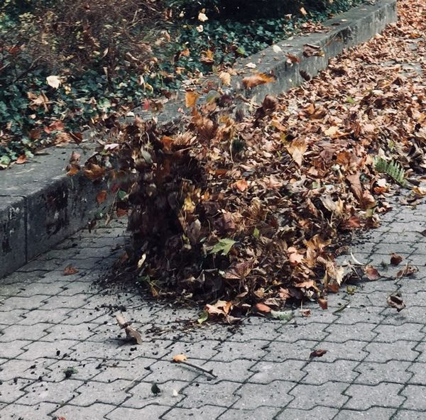 Autumn Leaf Change Leaves Fallen Nature Dry Outdoors Day Street No People Close-up Autumn Fall Leaves Leaf Blower Nature In The City Workers At Work Urban Exploration Eyeemphonephotography EyeEm Gallery EyeEm Nature Lover Ladyphotographerofthemonth