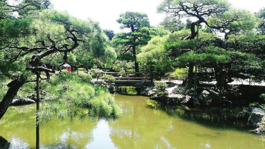 銀閣寺 Ginkakuji 京都 Kyoto Japan Nature Garden Htcbutterfly