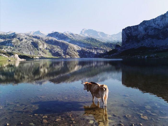 Horse standing in lake against mountain range