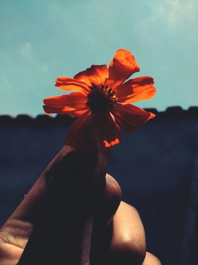 Um pouco de laranja 💘 Flower Beauty Flower Head Day