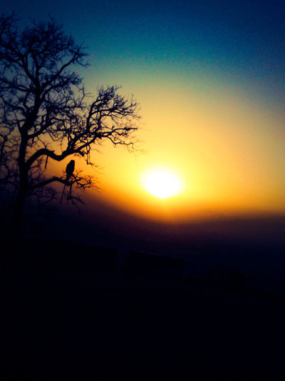 Sun Beauty In Nature Orange Color Nature Sky Outdoors No People Sunlight Tree Bird Bird Photography Birds Of EyeEm  Cool Air Soft Breeze Beautifull Nature Beautiful View Mountain at Mount Abu Rajasthan, India