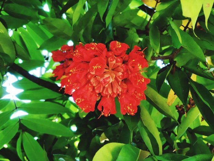 Flower cluster,