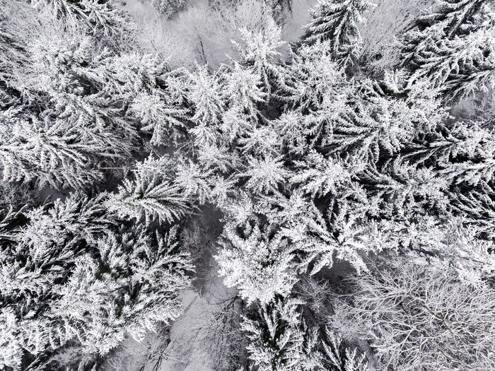 High Angle View Cold Temperature Field Backgrounds No People Nature Ice Winter Frozen Day Full Frame Outdoors Growth Snow Plant Close-up Grass Beauty In Nature