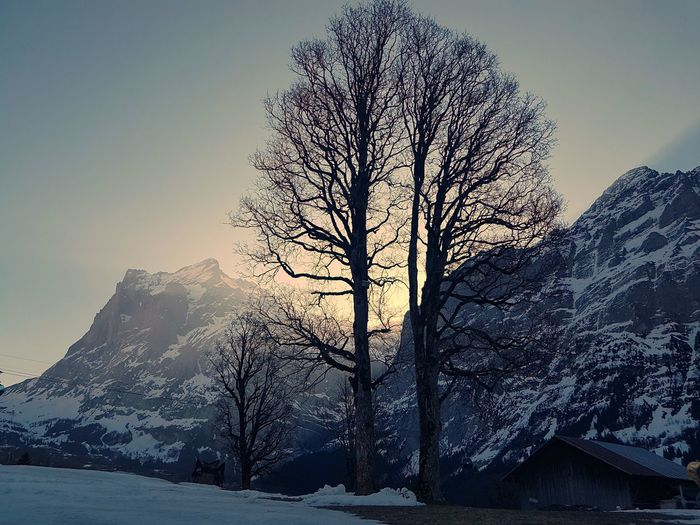 Morning Sunrise Tree Mountain Snow Galaxy Power In Nature Winter Sky Snowcapped Mountain