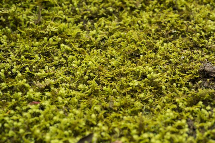 Full frame shot of moss growing on field