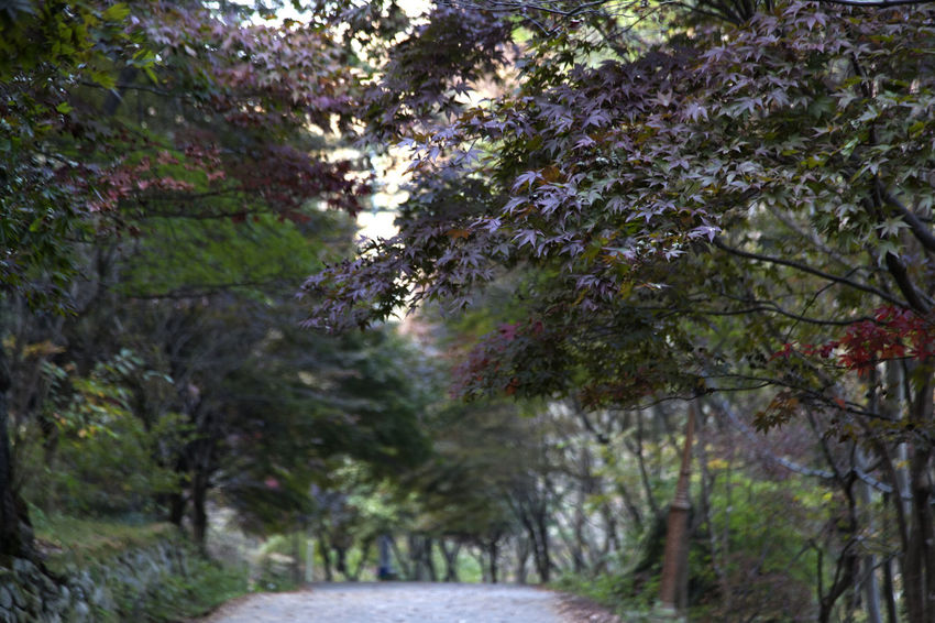 autumn in Maisan Mountain, Muan, Jeonbuk, South Korea Autumn Beauty In Nature Branch Day Fall Flower Forest Growth Lane Maisan Nature No People Outdoors Tree Walkway