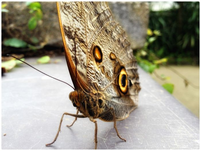 Butterfly Insect Close-up Detail Colors Pattern Eye4photography  Eye Em Nature Lover EyeEm Gallery EyeEm