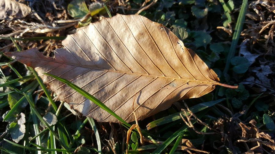 Golden leaf Day