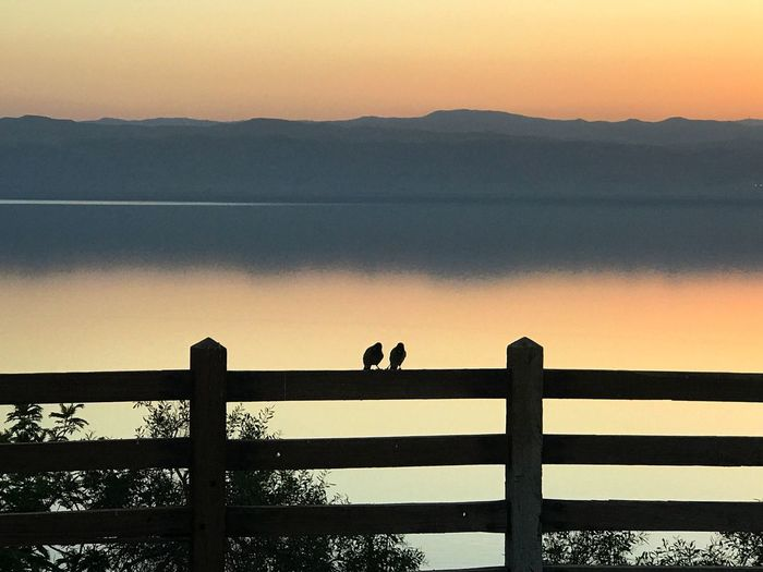 Friendship. Friends Friendship Birds Deadsea Jordan Sunset Nature Water Beauty In Nature Silhouette Animal Themes Scenics Sea Animals In The Wild Outdoors